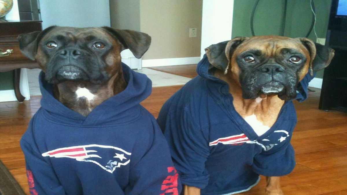 NFL Draft: Good Doggie Nike Belicick Makes Draft Pick, Short List for NFL GM Jobs