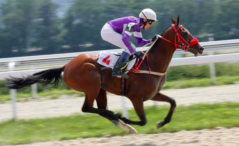 What Makes a Good Jockey?